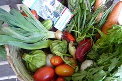 groentenmand stichting ayuda maya